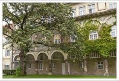 Огромный каштан во дворе Замка Грац (Grazer Burg).