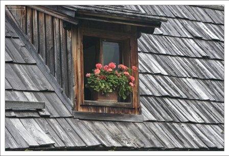 В Халльштатте обожают герань.