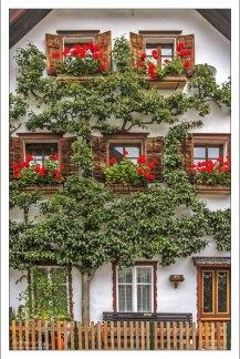 Плоские деревья - традиционный вид украшения в Халльштатте.
