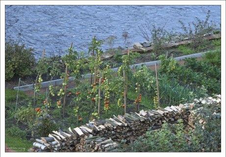 Огород на берегу реки.