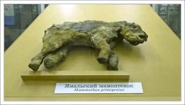 Ямальский мамонтёнок (мамонтёнок Маша) — сохранившийся в вечной мерзлоте экземпляр самки шерстистого мамонта возрастом 2—3 месяца, обнаруженный в 1988 году на восточном побережье полуострова Ямал. Радиоуглеродный анализ указывает, что возраст Ямальского мамонтёнка около 39 000 лет.