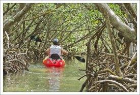 В мангровом туннеле.