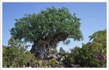 Tree of Life - Древо Жизни в парке Animal Kingdom.