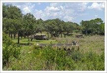 Отличное сафари на территории парка Animal Kingdom.