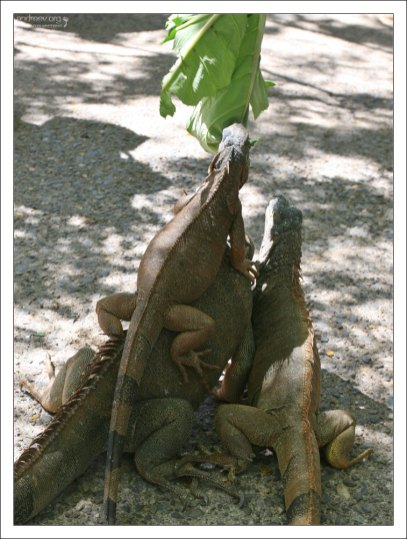 Ящеры поползли из всех щелей, свешивались с веток деревьев, карабкались друг на друга, разевая розовые беззубые пасти.