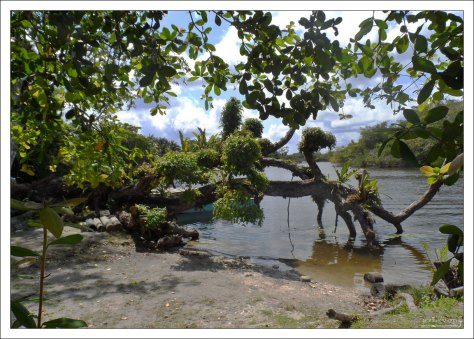 Новая река (New river, или Rio Nuevo).