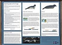 Два вида тюленей (обыкновенный и длинномордый), которые приплывают на пляж Ytri Tunga.