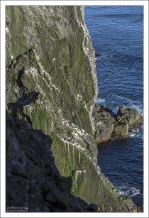Látrabjarg - самая западная точка Европы.