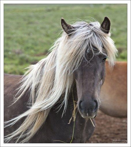 Лошадь невероятной красоты.