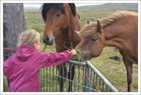 Лошади с удивлением рассматривают маленькую Сашу.