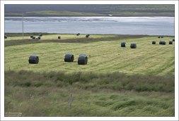 Закрывать сено в Исландии начали очень давно, с помощью шкур и шерстяных тканей. Иначе, часто меняющаяся погода от ветреной к дождливой, просто не давала ему высохнуть.