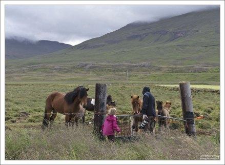 В X-м веке был принят закон, запрещающий импортировать лошадей в страну, чтобы предотвратить эпидемии.
