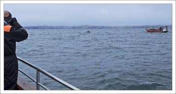 Фото-охота на китов в самом разгаре.