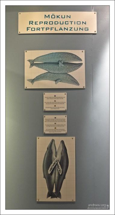 Трудности воспроизводства китов.