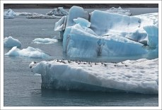 Ледяная база полярных крачек.