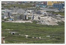 Словом «husky» изначально назвали эскимосов (или инуитов), «…известных как хаски, сокращение от хаскимос – так произносили слово «эскимос» английские моряки торговых судов».