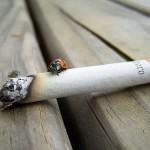 despre fumat, drujbe si democratie