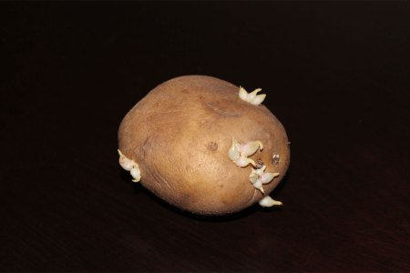 fotografie-cartof-1milion-dolari