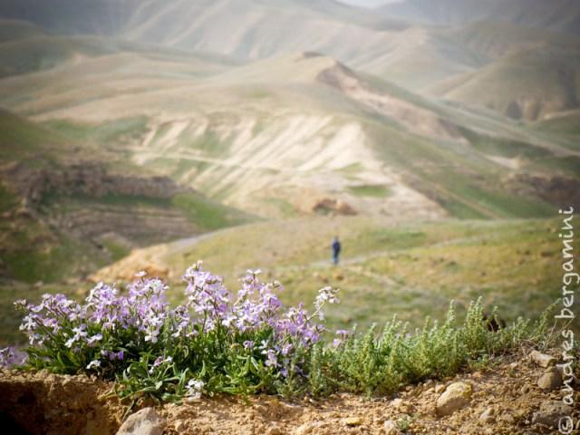 Tra i fiori di Wadi Mukellik con 22 amici