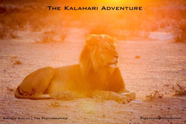 Kgalagadi Photography
