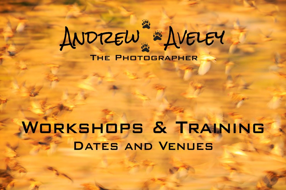 Below is a list of workshops that have been scheduled and confirmed for all Andrew Aveley's personalised photographic training