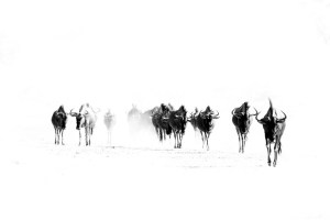 Digital witchcraft and a image of wildebeest