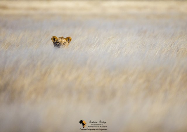 Namibia Wildlife Photography Tour