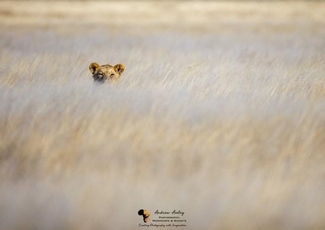 Namibia Wildlife Photography Tour & Photographic Safari