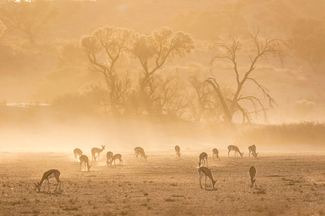 Kgalagadi Private Safari for 6 days - Photography Tour with Andrew Aveley & African Photographic Safaris to photography African Wildlife photos