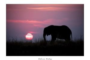 Sunset Light - Elephant Fine Art Print by Andrew Aveley - purchase online