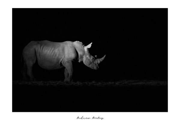 Dark Knight - Rhino Fine Art Print by Andrew Aveley - purchase online
