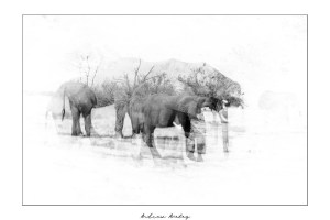 Layers - Elephant Fine Art Print by Andrew Aveley - purchase online