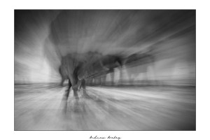Ghosts - Elephant Fine Art Print by Andrew Aveley - purchase online