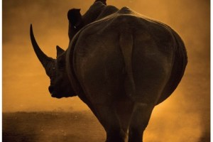 African Wildlife Photographer in your bag