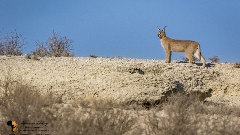 Kgalagadi Photography Trip Report – July 2019