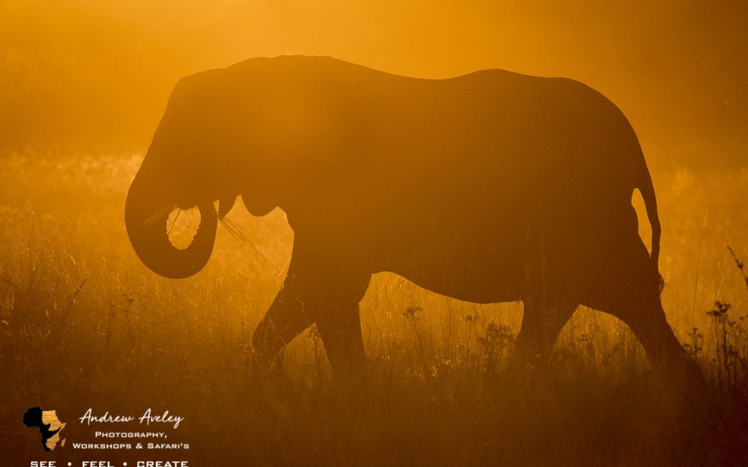 Zimbabwe – Wild Matusadona