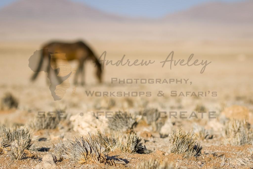 Namibian Desert Horse
