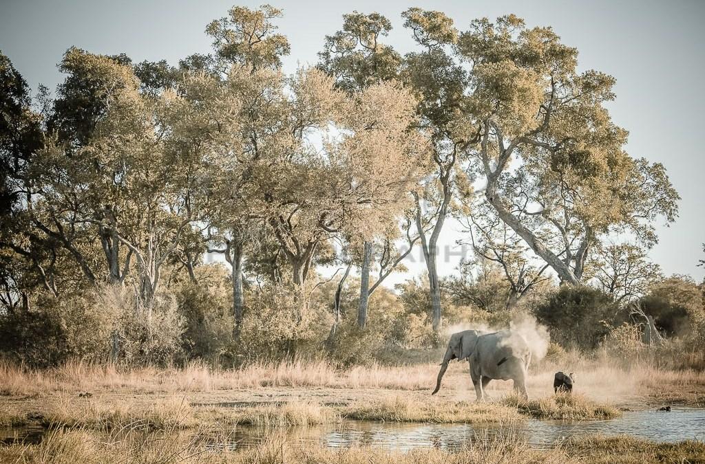 Okavango Wildlife