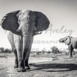 Okavango Elephant Bunker