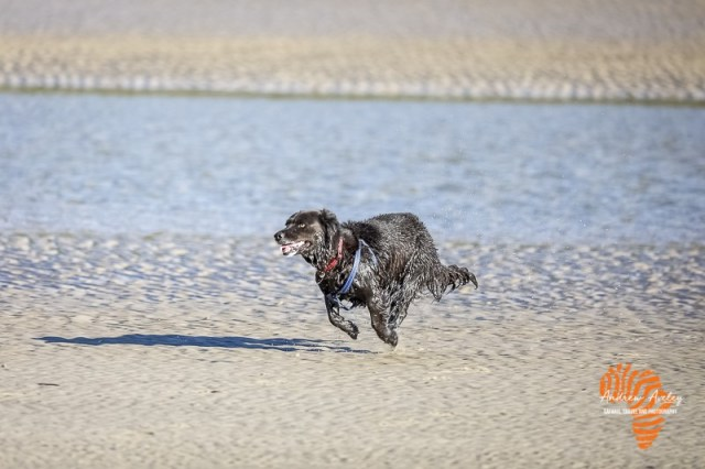 Canon R6 Image from a field test of a running black dog