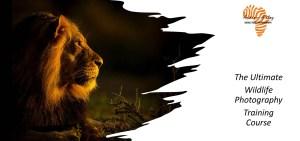 The Ultimate Wildlife Photography Training - Lion Image