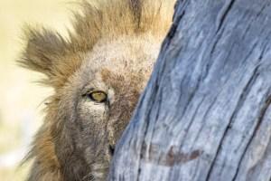 Wildlife Photos by Andrew Aveley