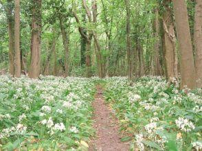 Singledge Wood