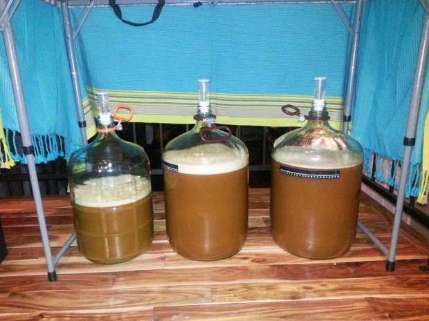 pliny-fermenters