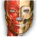 Anatomy Learning 3D Atlas apk