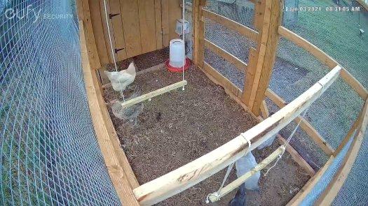 Eufycam 2 Pro Chicken Coop View