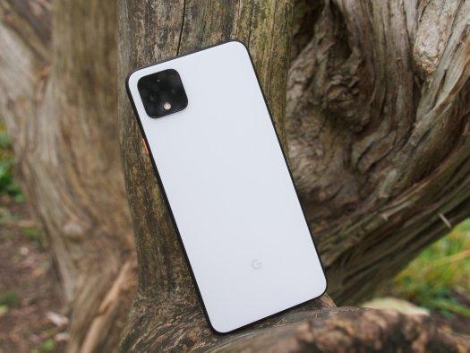 Pixel 4 XL sitting on a tree