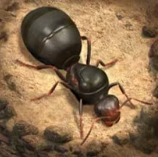 The Ants Better Icon