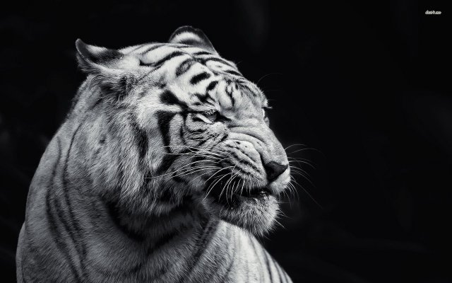 animal-wallpaper-black-and-white-innovative-with-photos-of-animal-wallpaper-wallpaper-on-gallery