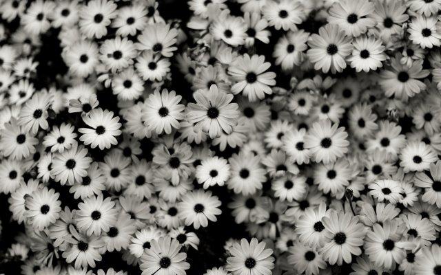 black-white-background-2